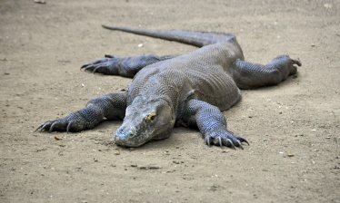 Amazing cruise in Komodo 9 nights (Labuan Bajo - Labuan Bajo)